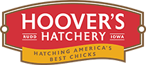 Hoover's Hatchery Promo Codes